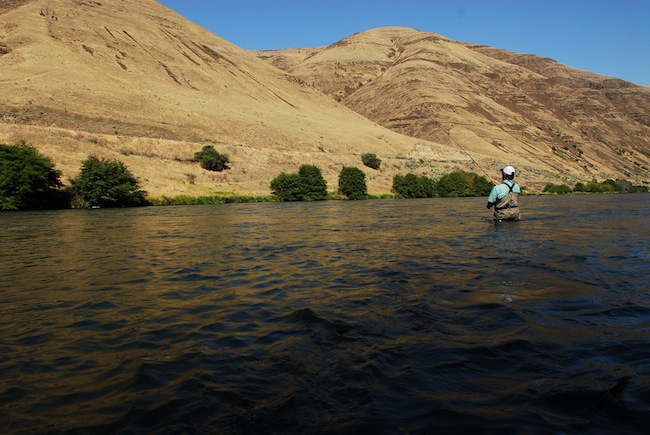 Chris Santella bombing out tight loops and looking for Deschutes River steelhead.