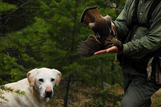 Cracker is a great dog to hunt with and just an all-around well behaved and nice animal. Had a blast watching him work.