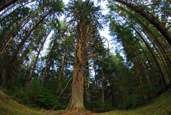 The forests of Haidi Gwaii are mystical. Walking among the massive trees is a surreal experience.