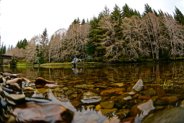 A dreamy rainforest landscape. A bunch of grabby and large steelhead. Very little angling pressure and a week to get 'er all done. Dreams are promised and fulfilled on Haida Gwaii.