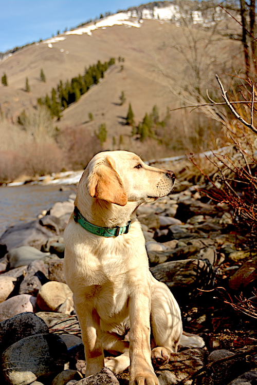 Rye, keeping watch for lions and bears, or just wondering what the world's all about.